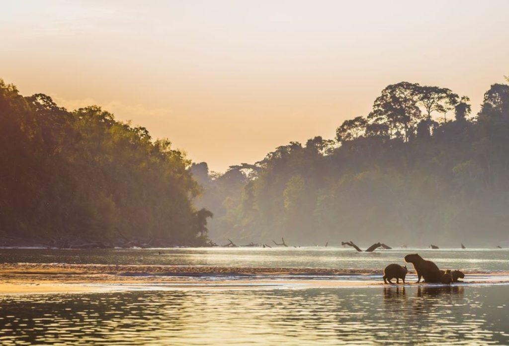 Parque Nacional del Manú - Atracciones en Perú
